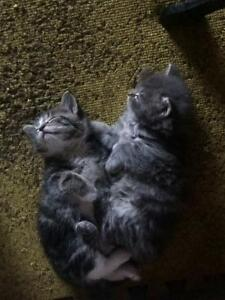 5 kittens to give away
