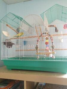 budgies with cage and food
