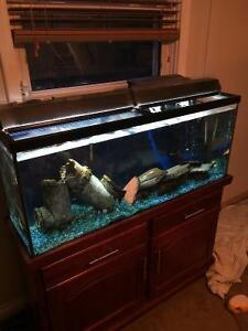 55 Gallon Fish tank aand stand