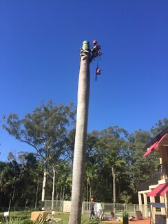 TOMS TREE LOPPING ! South east Brisbane's palm tree specialists !