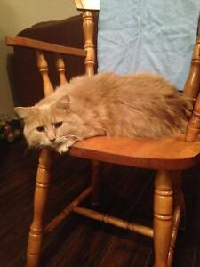 Affectionate male cat looking for a loving home