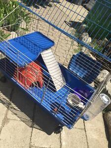 2 week old guinea pig cage for sale