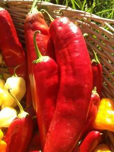 Carolina Reaper/ Ghost Pepper/ Chili Pepper seeds and Hot Sauce Stratford Kitchener Area image 9