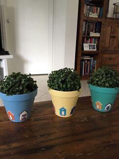 3x beach house pots