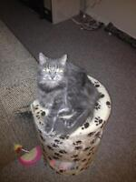 LOST CAT !!