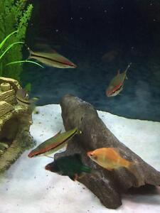Assorted fresh water tropical fish