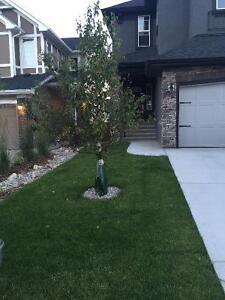 NEW CLEAN HOUSE YR 2015 (BASEMENT APARTMENT FOR RENT) SE CALGARY
