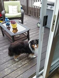 EXPERIENCED IN-YOUR HOME/PET SITTER -24/7 St. John's Newfoundland image 7