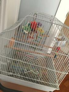 Budgie with cage for sale