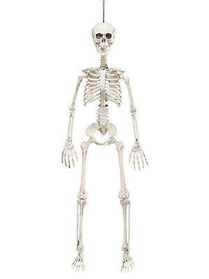 Posable Skeleton - 90cm Decoration for Halloween