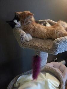 Free 2 loving wonderful cats looking for a new home