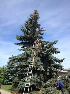 Caretaking - acreage, animals, farm and livestock+ tree removal Strathcona County Edmonton Area image 3