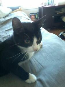 Cat looking for forever home Kingston Kingston Area image 2