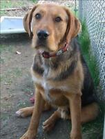 """Young Male Dog - Airedale Terrier: """"Kiwa"""""""