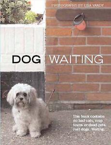 Dog Waiting, Lisa Vandy