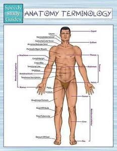 Anatomy Terminology (Speedy Study Guides) by Speedy Publishing LLC -Paperback
