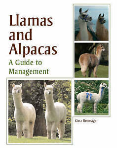 Llamas and Alpacas Gina Bromage - <span itemprop=availableAtOrFrom>Fairford, United Kingdom</span> - Llamas and Alpacas Gina Bromage - Fairford, United Kingdom