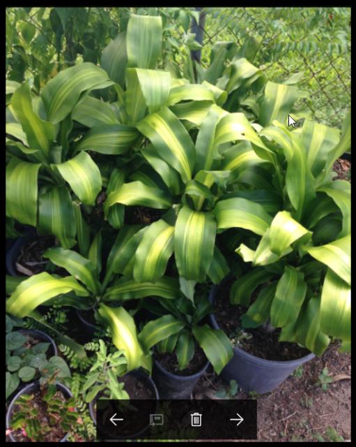 Various Indoor Outdoor plants   Plants   Gumtree Australia ...