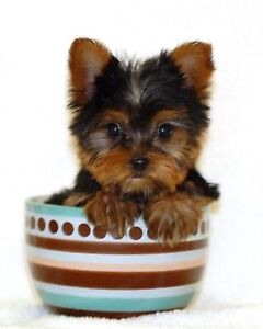 Looking for Yorkshire Teacup for adaptation