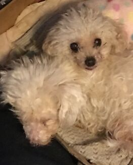 Wanted: Wanted to buy tiny female puppy or older dog to love.