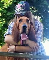 "Adult Male Dog - Bloodhound: ""Justice"""