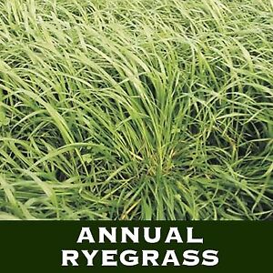 Annual Ryegrass For Sale