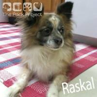 Raskal is looking for his forever home