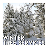 TREE TRIMMING AND REMOVAL SERVICE CALL/TEXT 204-930-9119