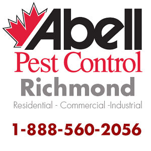 Guaranteed Pest Control Services in Richmond/1-888-560-2056