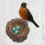 Robin's Roost Vintage