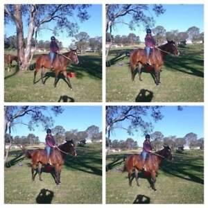 Horse Rider/ carer Penrith Penrith Area Preview
