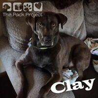 Clay is looking for his forever home