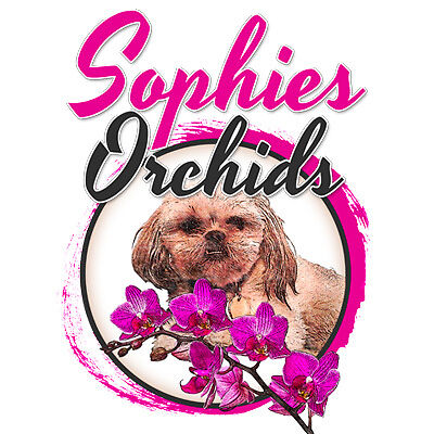 Sophie's Orchids and Things