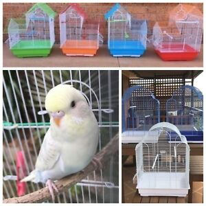 Beautiful baby budgie $25: New cages $35-$45 Kellyville The Hills District Preview