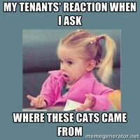 Tenants let your rental get overrun by animals?