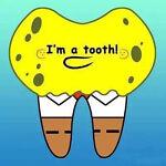 dental shop 2013