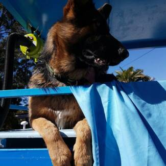 Mobile dog clipping in queensland gumtree australia free local 4 paws mobile dog wash solutioingenieria Choice Image