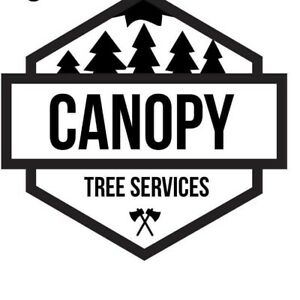 Canopy trees services sydney Waverley Eastern Suburbs Preview
