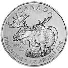 Canadian Silver Moose Coin