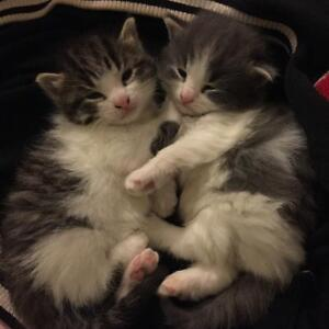 three 1 month old kittens
