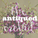 the-antiqued-orchid