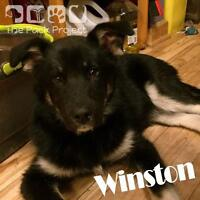 Winston is looking for his foreverhome
