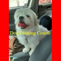 Dog Training Course Brockville