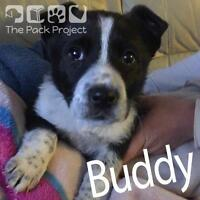 Buddy is looking for his forever home