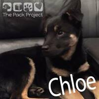 Chloe is looking for her forever home