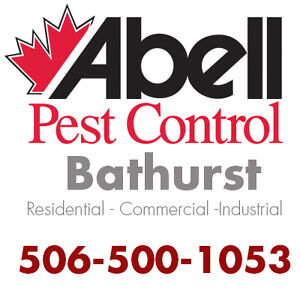 Guaranteed Pest Control Services for Bathurst/506-500-1053
