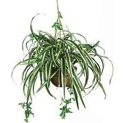 Artificial Spider Plant