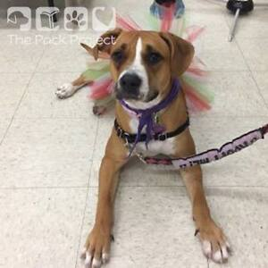 Lacey is ready to be adopted and looking for her forever home Regina Regina Area image 4