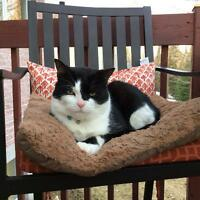 Black and white adult cat