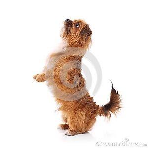Wtb small dog / for tricks Warrnambool Warrnambool City Preview